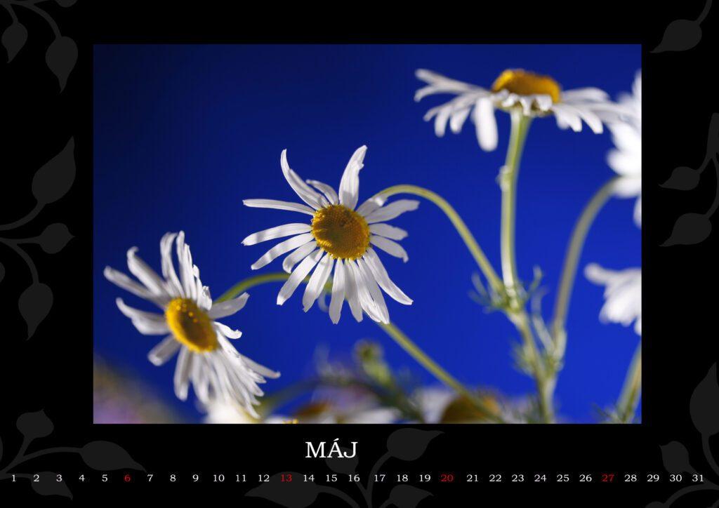 Kalendár